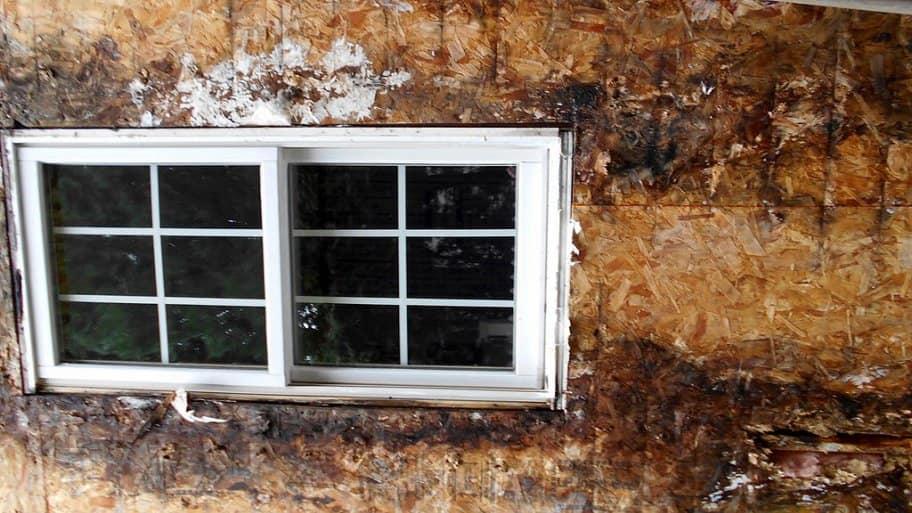 Dry rot near a window
