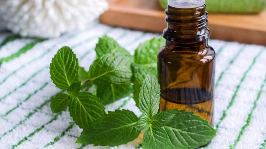 Essential mint oil (Photo by kazmulka / iStock / Getty Images Plus via Getty Images)