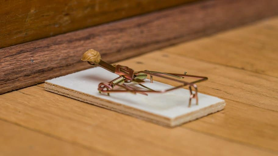 peanut butter bait wood snap mouse trap