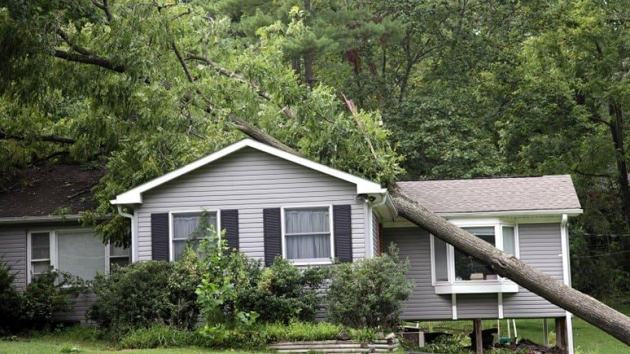 Fallen tree on house (Photo by doublediamondphoto / E+ via Getty Images)