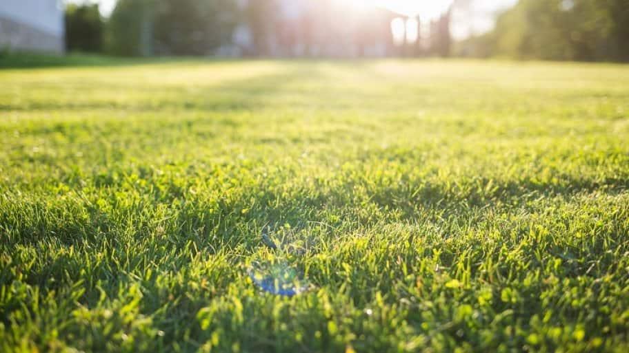 Lush green grass (Photo by © Natalia Bodrova / iStock / Getty Images)