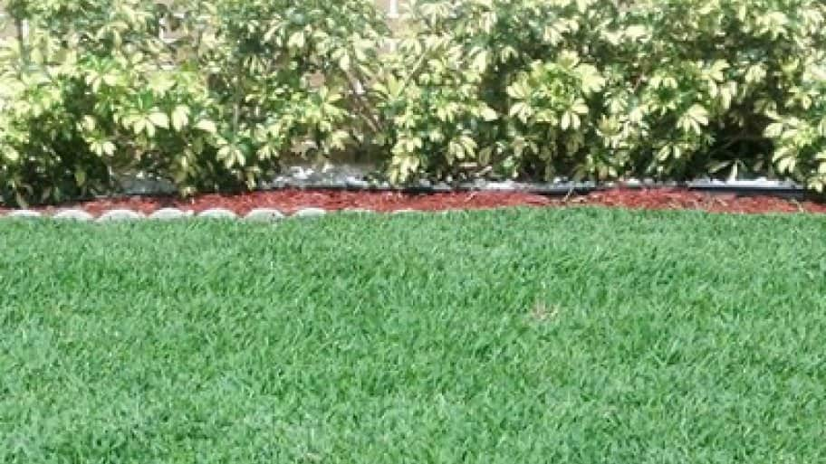 September to October is the ideal time to seed your lawn, says Hildreth. (Photo courtesy of Angie's List member Lindsey S. of Virginia Beach, Va.)
