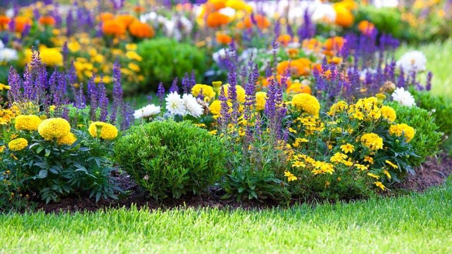 Manicured flower bed