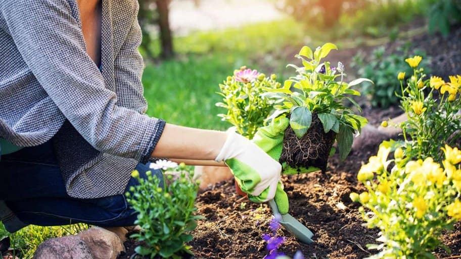 Woman planting flowers in garden bed