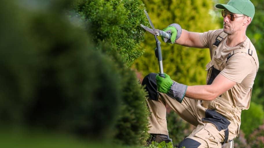 A professional giving a bush shape in a garden