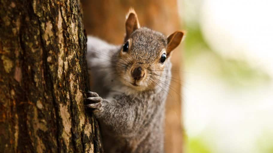 A squirrel staring at the camera (Photo by AlexTurton/Moment via Getty Images)