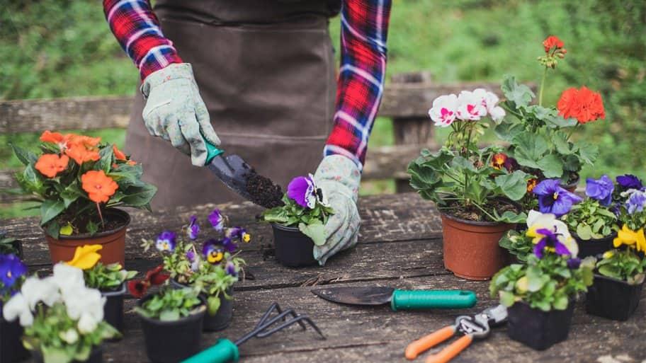 gardening summer flowers outdoor table