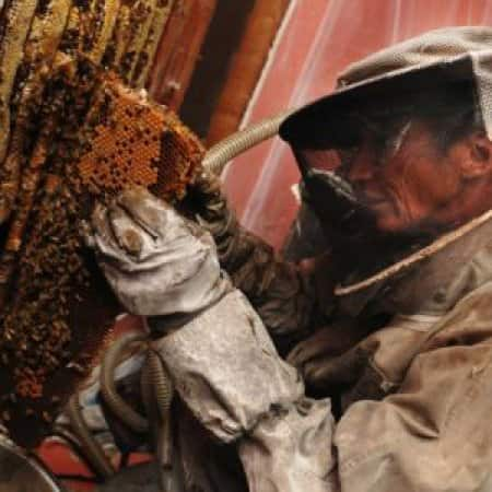 honeycomb removal bees