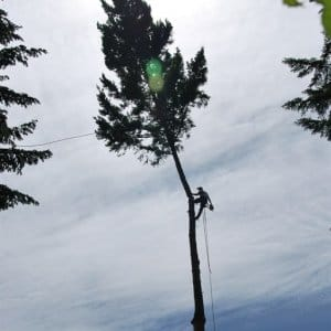 When hiring a tree service, look for a certified arborist or a pro with extensive experience. (Photo courtesy of Angie's List member Martin Bryan)