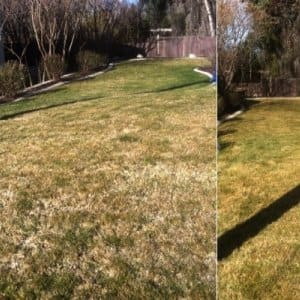 Dethatching keeps your grass healthy and enhances the beauty of your lawn. (Photo courtesy of Lawn Thumbs)