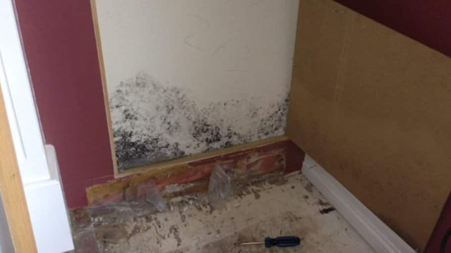 Investors can avoid a precarious situation by cleaning the house of mold before the carpet has been installed and the walls have been painted, says Swenson. (Photo courtesy of Angie's List member Christopher A. of Colorado Springs, Colo.)