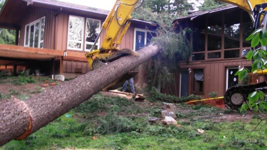 large tree fallen on a house