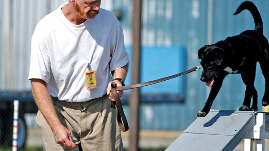 man holding dog on leash while dog balances on beam