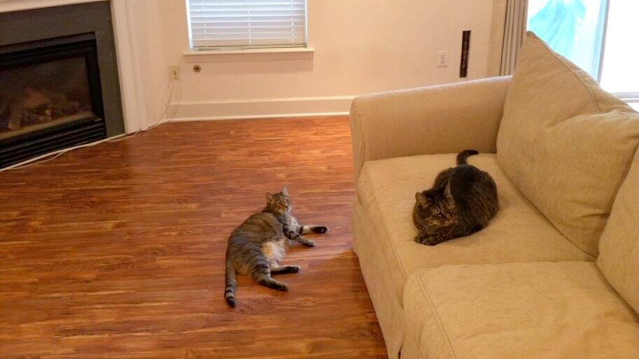 A cat lying on vinyl hardwood floor and another cat sits on a sofa